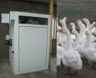 На гусиной ферме БИОН-4000зт